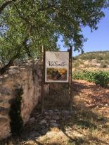 The Val Soltillo vineyards
